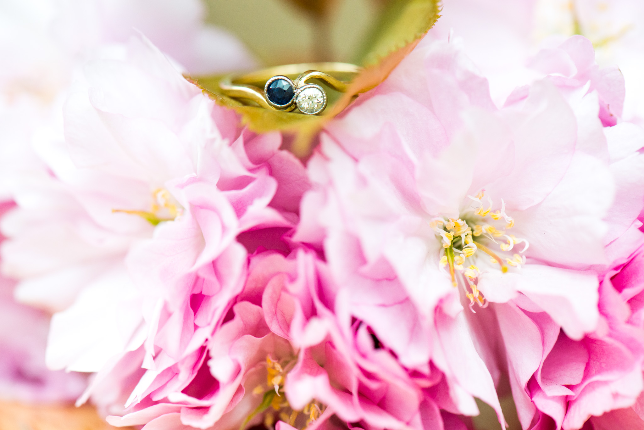 Engagement Ring on Cherry Blossom