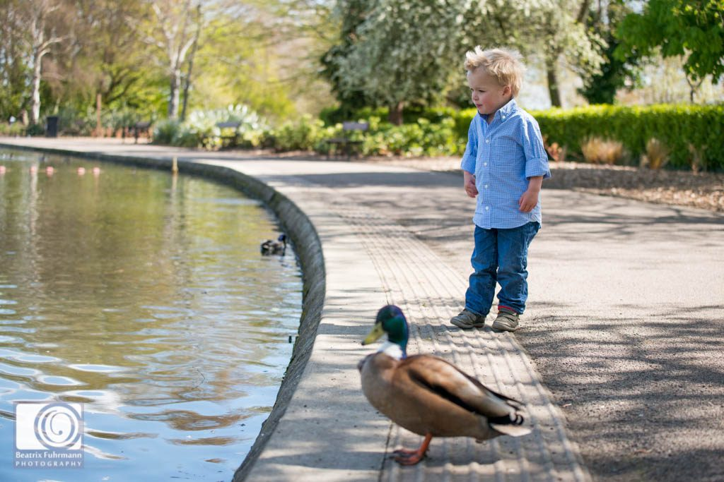 Toddler boy and a duck at the Alexandra Palace duck pond